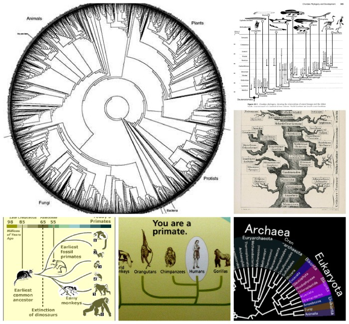 PhyloCollage
