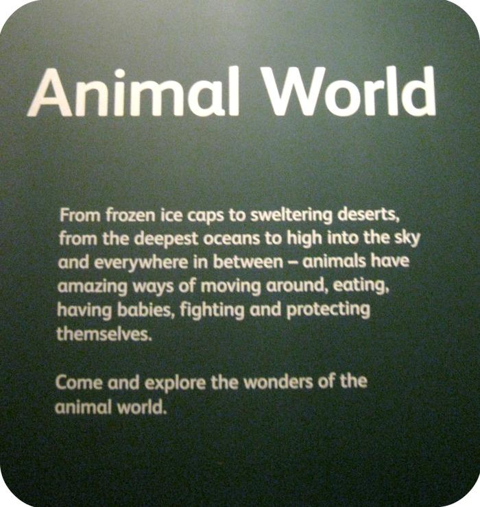 AnimalWorld10