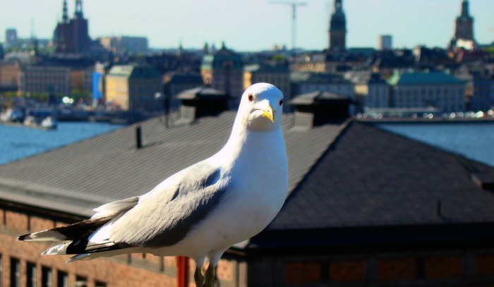 SwedishSeagull