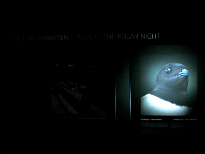 PolarNights3