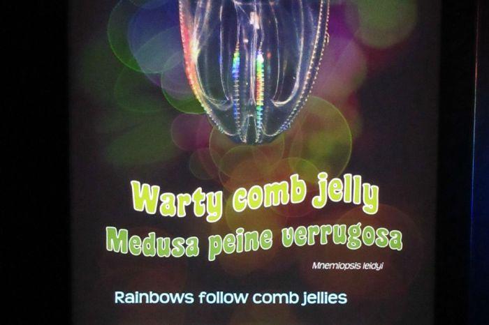 Jellies6